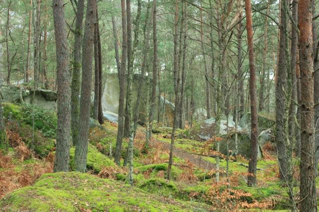 Foto: Henrik Petré. Angle Ben's 7a+ i Isatis sticker fram mellan träden.